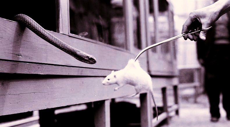 http://juralib.noblogs.org/files/2012/06/snake-mouse.jpg
