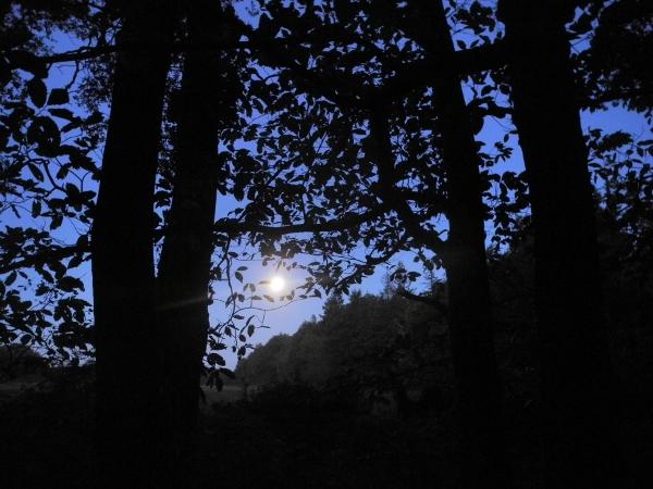 http://juralib.noblogs.org/files/2012/11/031.jpg