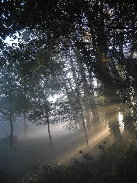 http://juralib.noblogs.org/files/2012/11/04.jpg